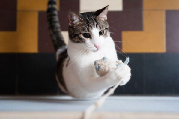 Dénichez les jouets pour votre chat sur catapart.fr